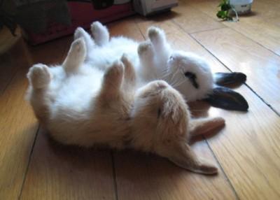 2011_rabbit
